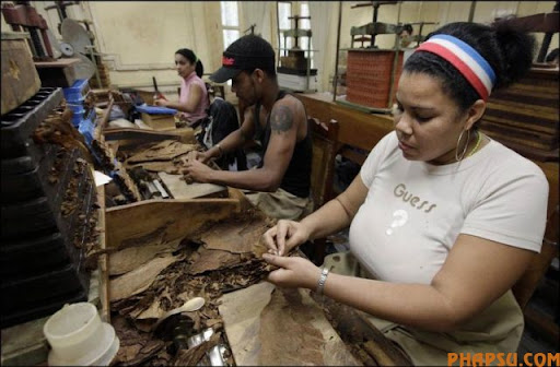 cuban_cigars_cohiba_15.jpg