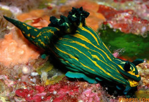 amazing_sea_slugs_640_20.jpg