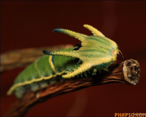 beautiful_caterpillars_13.jpg