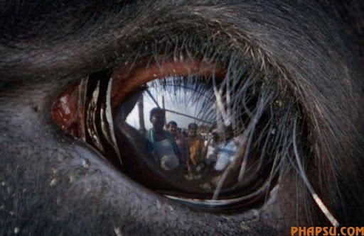 animal_eyes_640_05.jpg