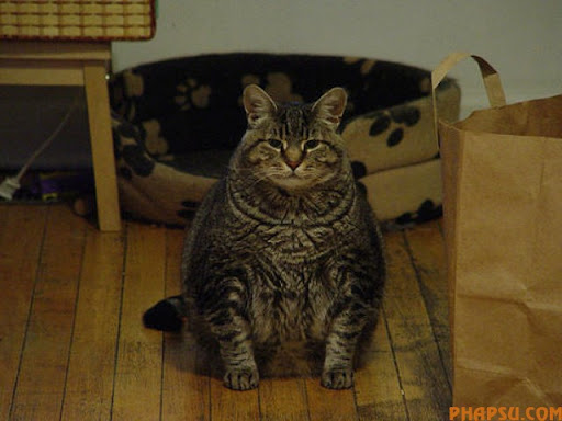 fatty_cats_640_03.jpg