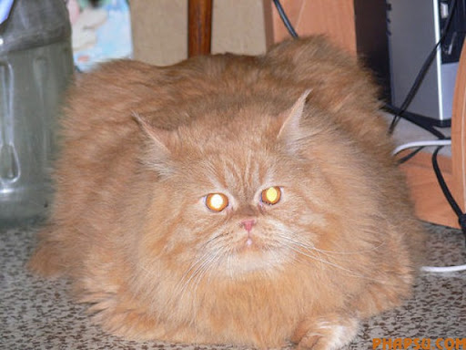 fatty_cats_640_04.jpg