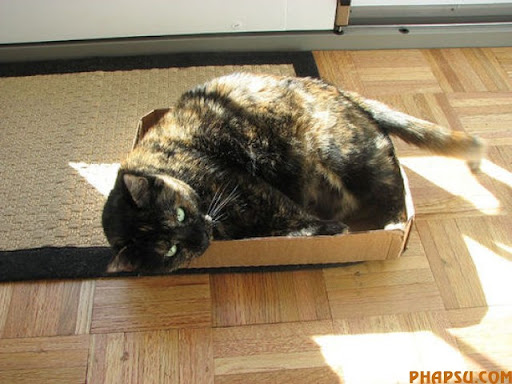fatty_cats_640_41.jpg