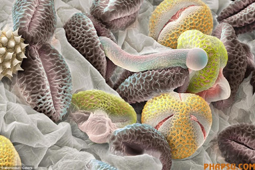 awesome_microscope_images_640_03.jpg