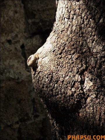 tree_26.jpg