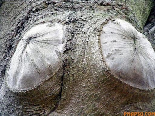 tree_05.jpg