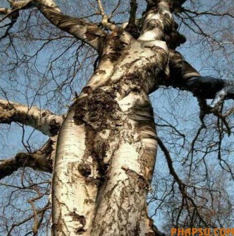 tree_13.jpg