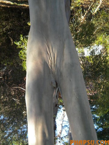 tree_27.jpg