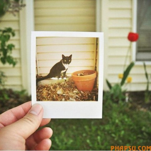 playing-with-polaroid16.jpg