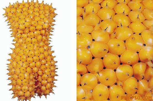 fruit-sculpture.jpg