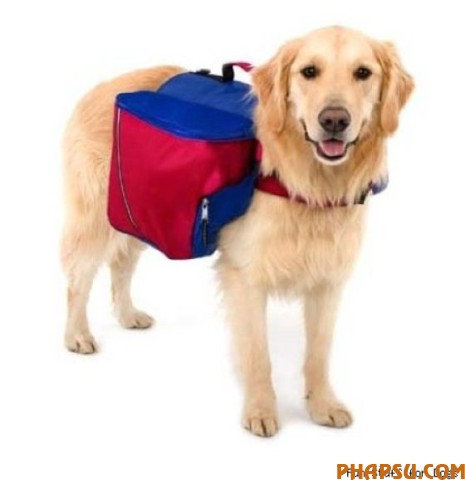 the_craziest_backpacks_640_19.jpg