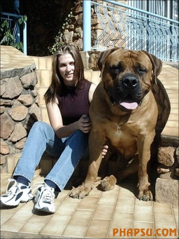 the-biggest-dogs12.jpg