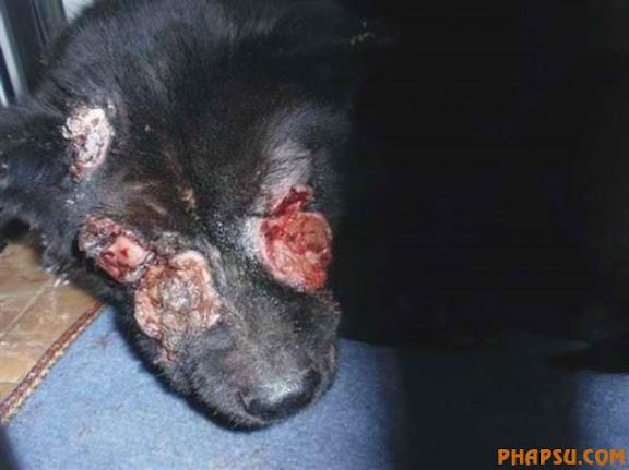 xixi-foshan-dog-abused-02-560x419.jpg