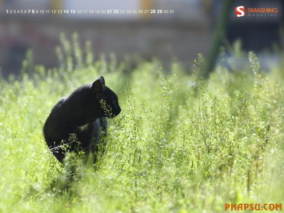 summer-cat.jpg