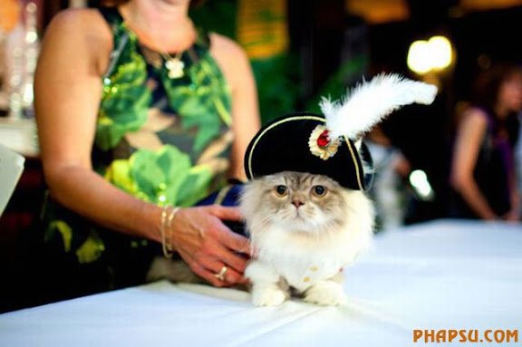 cats_in_haute_640_36.jpg