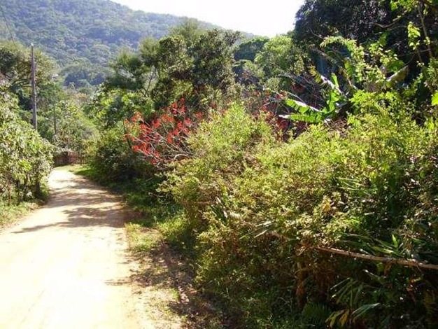 caminho_da_costa_de_cima_pantano