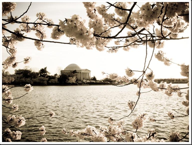 Spring 2010 026