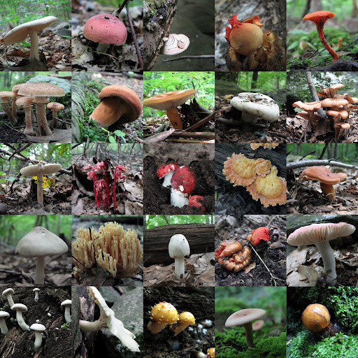 Mushroom montage, from the Michael Ciaiola Conservation Area