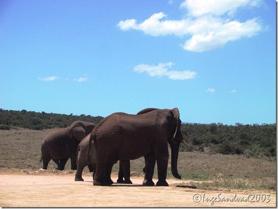elefanter på vejen