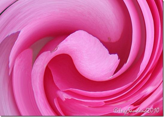 rose-makro