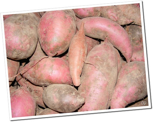 "casestudy demand of sweet potatoes in the united states United states minor us sweet potato exports surge global demand has risen sharply ""there's no doubt that global demand for us sweet potatoes is on the."