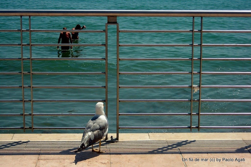 Voyeur - un gabbiano guardone - a peeping seagull