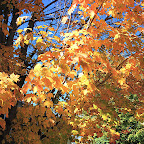 Beautiful Fall colors in New England image