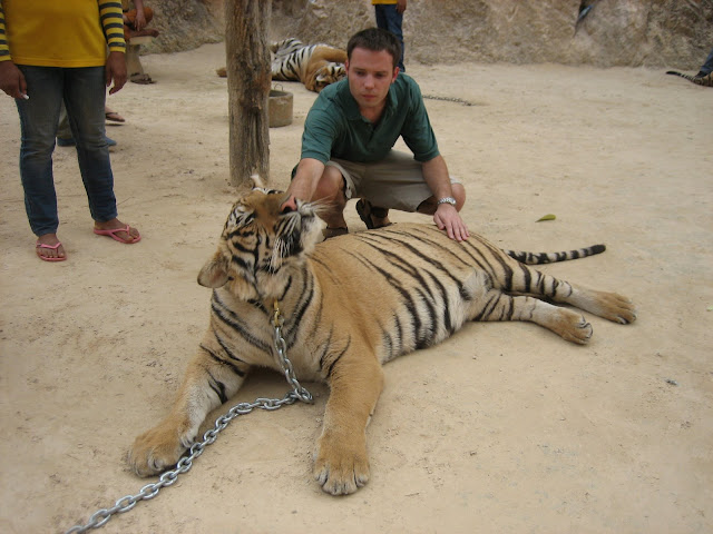 Tygrysiątka