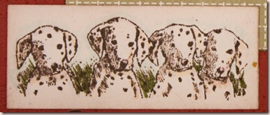 dalmatian thanks closeup