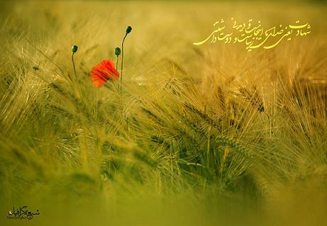 زندگی زیباست اما شهادت زیباتر
