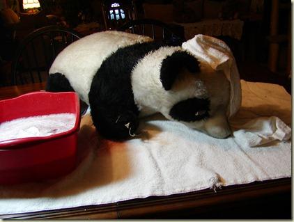 PandaProject (3)