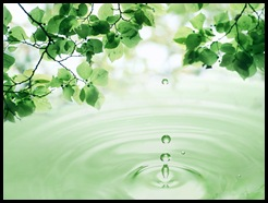 3D_Leaves_and_Water_Drop