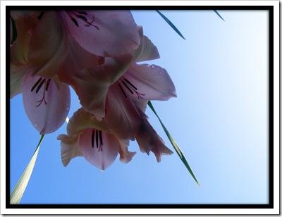 Pink_Flowers_underside_by_simonruddphotos