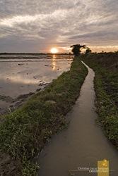 Waterways Along the Rice Paddies
