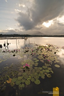 Lotuses vs Clouds