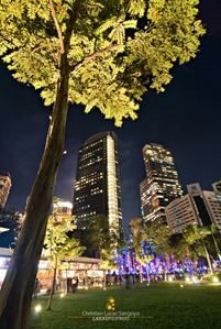 Trees and Skyscrapers at the Ayala Triangle