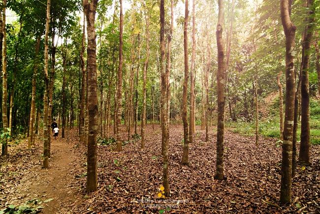 Hiking Through Trees at Wawa Dam