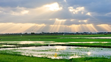 Creposcular Light at the Candaba Wetlands