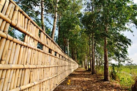 Candaba Bird Fence