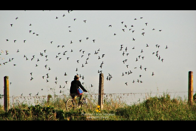 A Biker Among the Birds of Candaba Wetlands