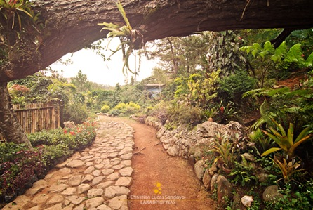 The Paths Along the Baguio Orchidarium