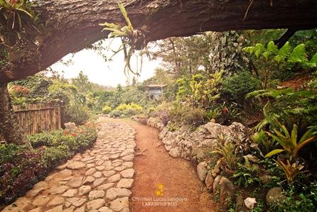 The Paths Along the Baguio Orchidarium