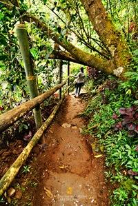 Tam-Awan Village Trail in Baguio City
