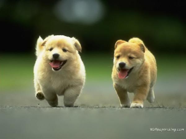 รูปภาพ น้องหมา รูปน้องหมา น่ารัก น่ากอด
