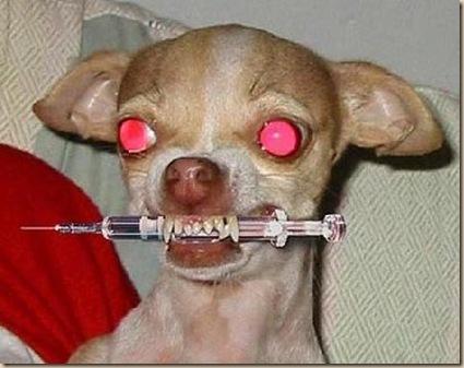 Perro psicótico