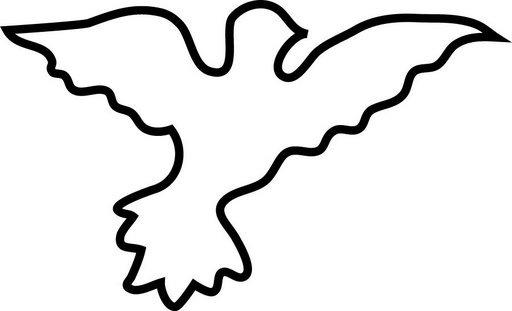 palomas paz (7)