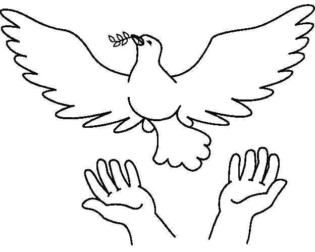 palomas paz (12)