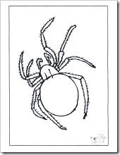 insectos (3)