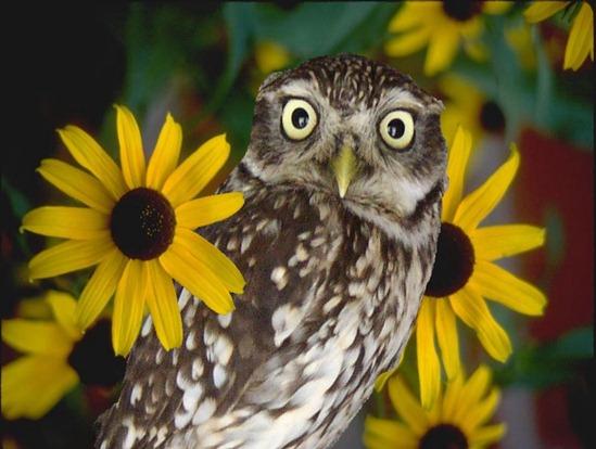 búhos imagenesifotos (1)