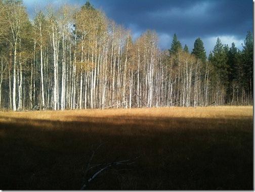 Meadow - Fall 2009